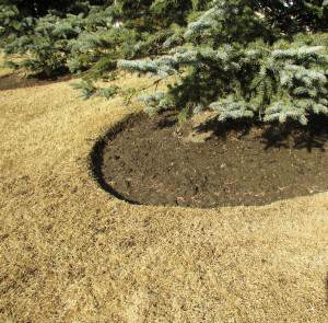 trawa po zimie 1