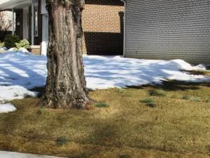 trawa po zimie 2