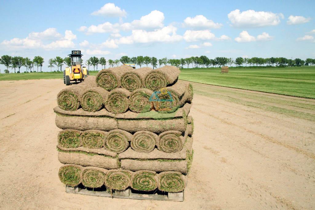 trawa z rolki, trawa rolowana, trawa na rolce, trawniki z rolki, trawa poznań, trawniki poznań