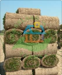 trawa z rolki, trawa rolowana, trawnik z rolki poznań, trawa z rolki poznań, kaźmierz