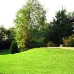 trawniki-w-rolkach-2