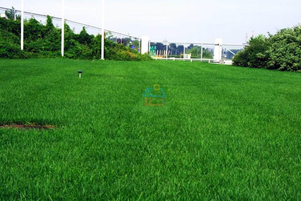 zielony-trawnik