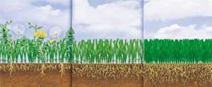Wpływ nawozu na trawę