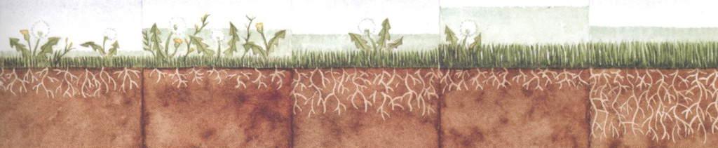 Jak kosić trawnik?