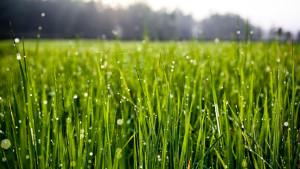 grass-w-czasie-budowy