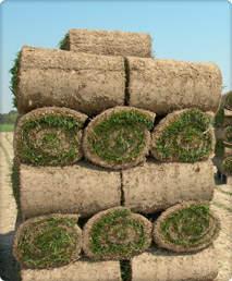 roller-grass