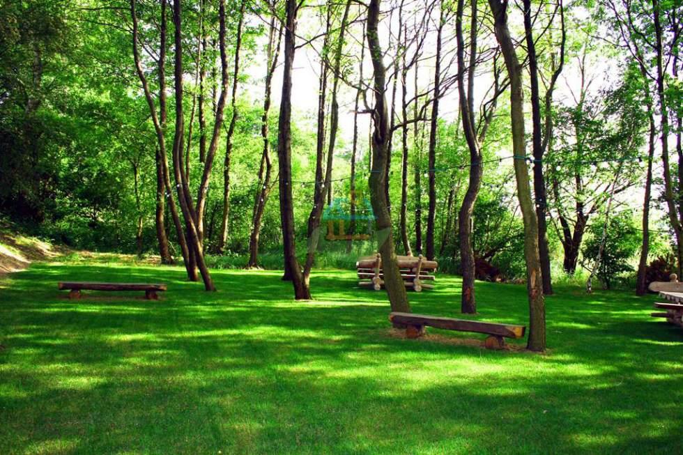 trawa-w-lesie