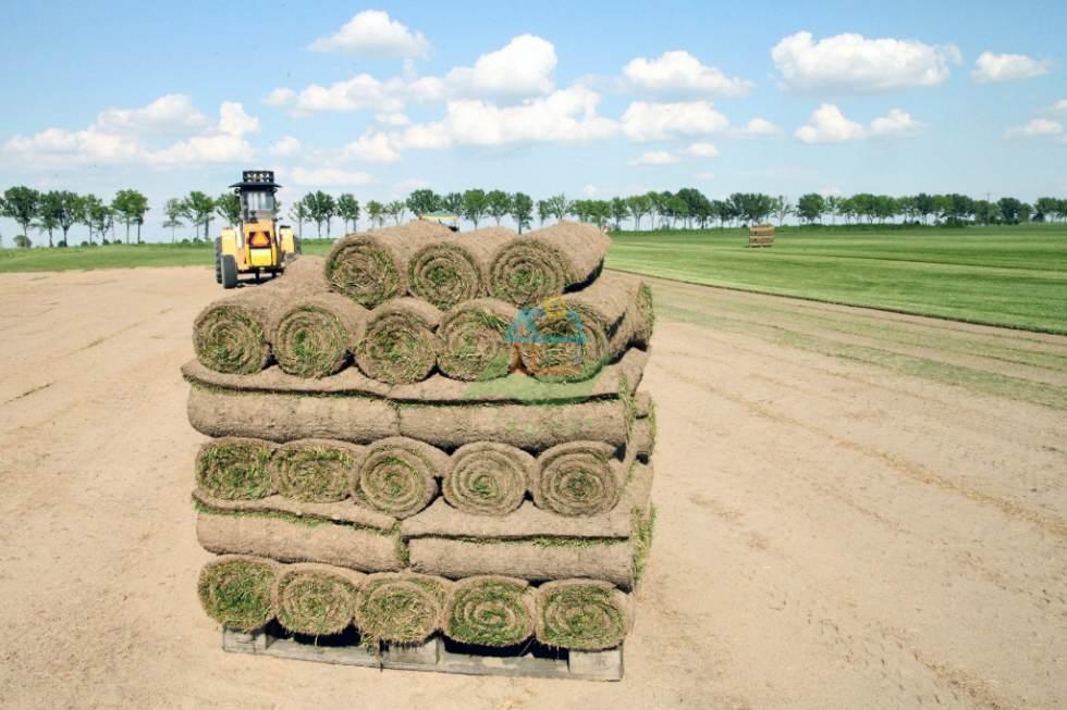 trawa-w-rolkach-grasslandfarms