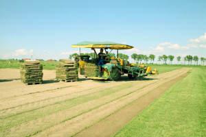 trawnik-na-rolce