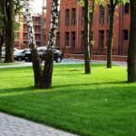 trawniki-poznan-city-center-2