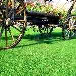trawniki-w-rolkach-3