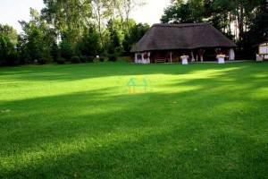 trawniki-w-rolkach-5