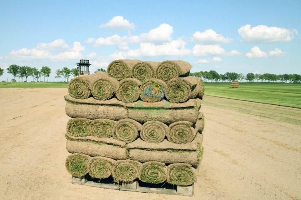 Jak dbać o trawę - Podstawowe informacje