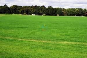 zielone-trawniki-1