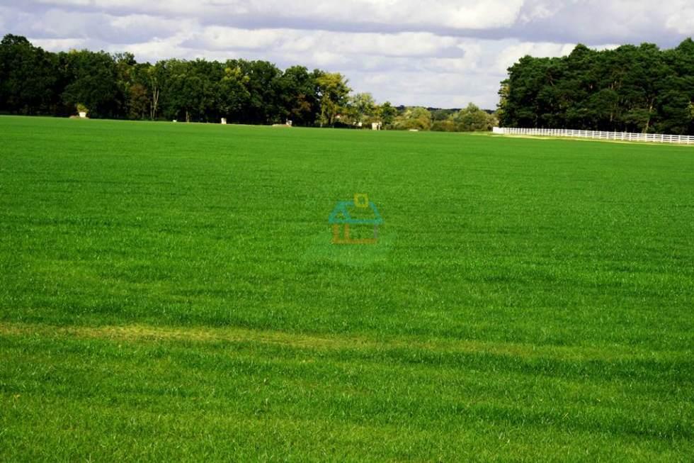 zielone-trawniki