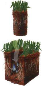 Działanie napowietrzania trawy czyli aeracji