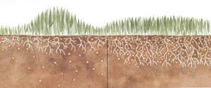 Wpływ nawozów wolnorozpuszczalnych na wzrost trawy